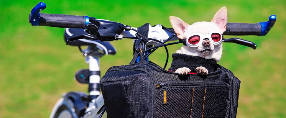 Fietzakken fietstocht